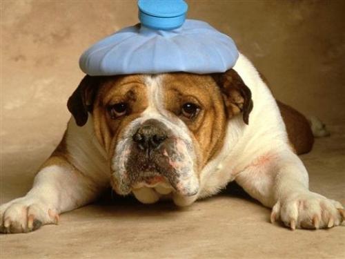 Soffri di mal di Testa?